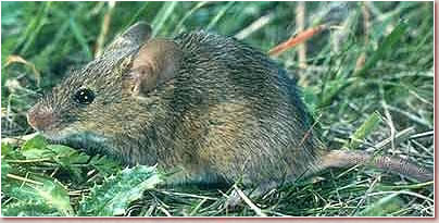 photo of rodents