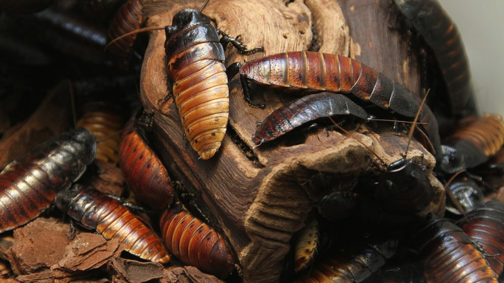 Nevada pest control for Roaches